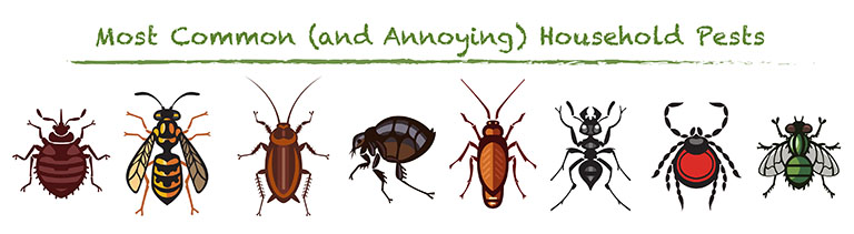 Melbourne-FL-Green-Earth-Pest-Control-Indoor-Insects household pests