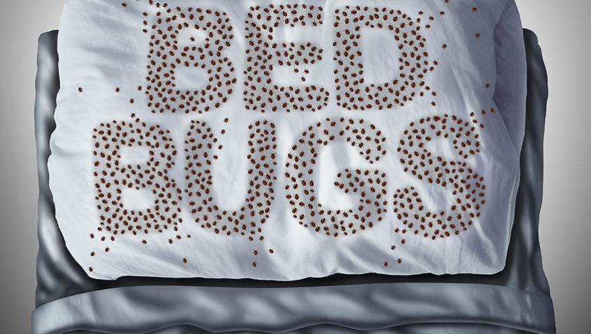 back to college bed bugs green earth pest control- melbourne fl