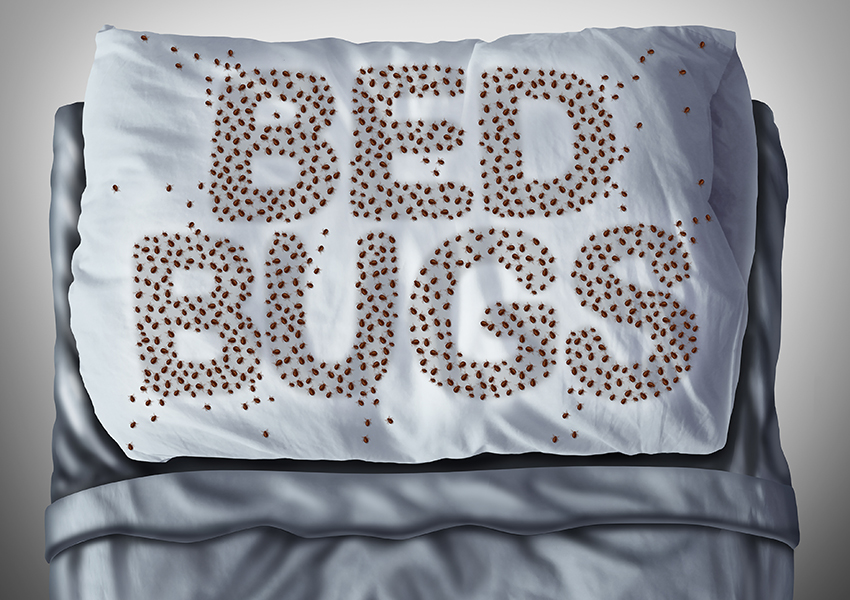 Don't Go Back to College with Bed Bugs